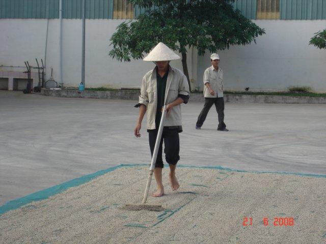 phoca_thumb_l_PEPE-BIANCO-essiccazione-Vietnam-1