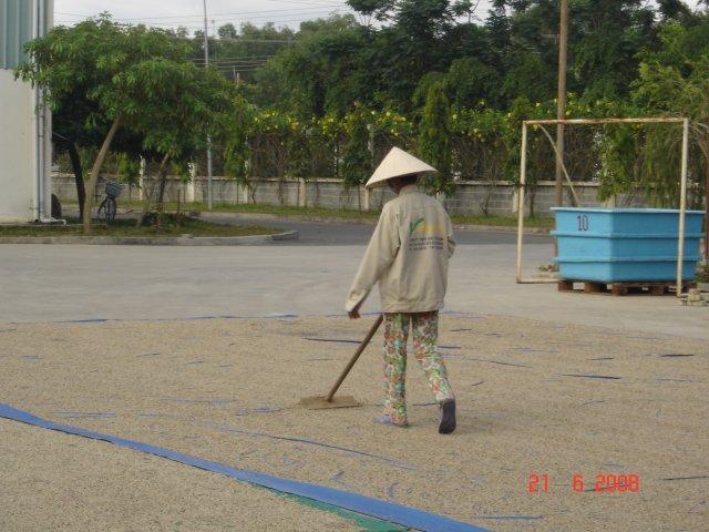phoca_thumb_l_PEPE-BIANCO-essiccazione-Vietnam