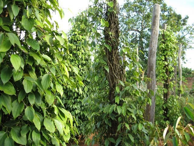 phoca_thumb_l_pepper-farms-new-year-002-640x480-640x480-640x480