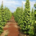 phoca_thumb_l_pepper farms  new year 032 640×480 640×480 640×480