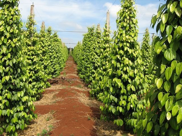 phoca_thumb_l_pepper-farms-new-year-032-640x480-640x480-640x480