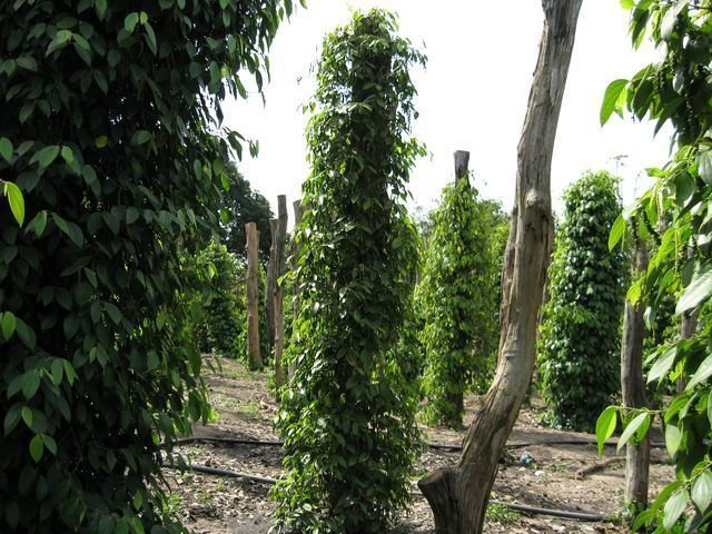 phoca_thumb_l_pepper-farms-new-year-059-640x480-640x480-640x480